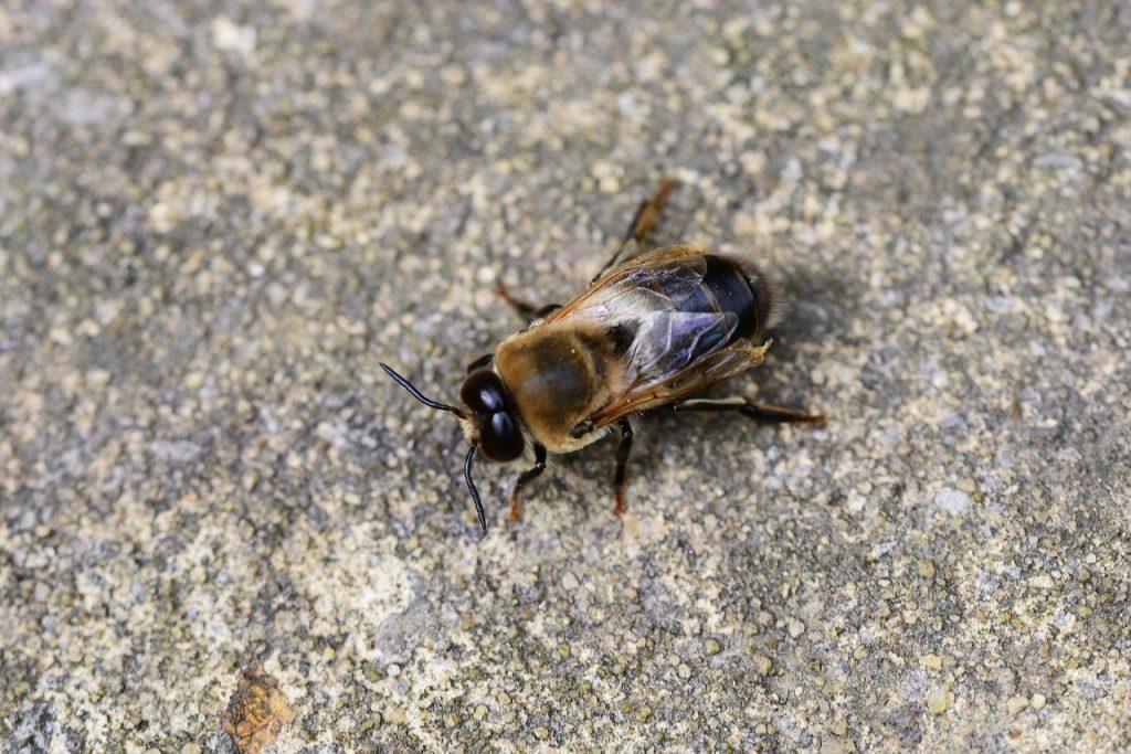 kampanja #zacebele: Kako živijo čebele