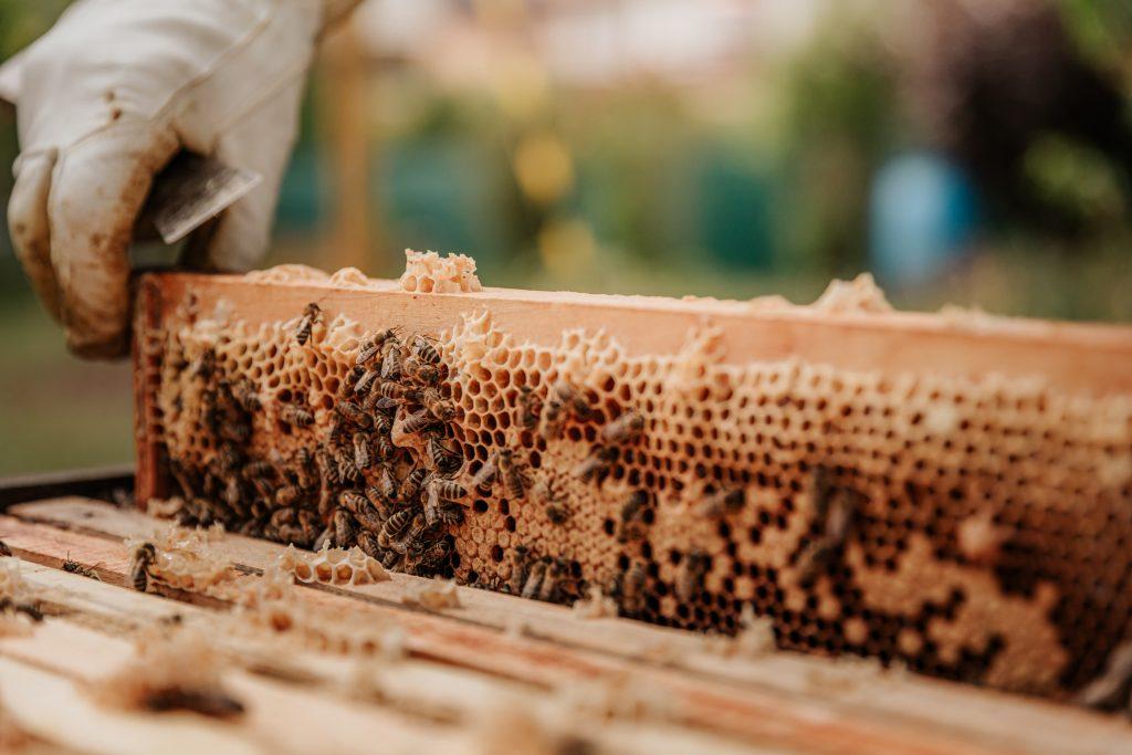 kampanja #začebele: Svetovni dan čebel 4