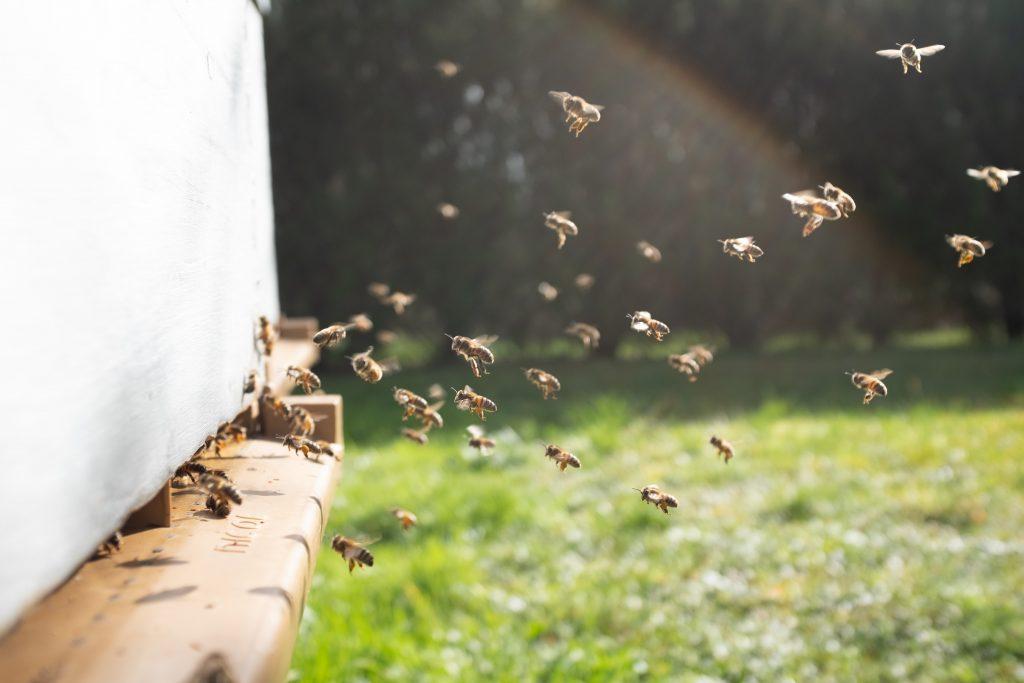 kampanja #začebele: Svetovni dan čebel 5