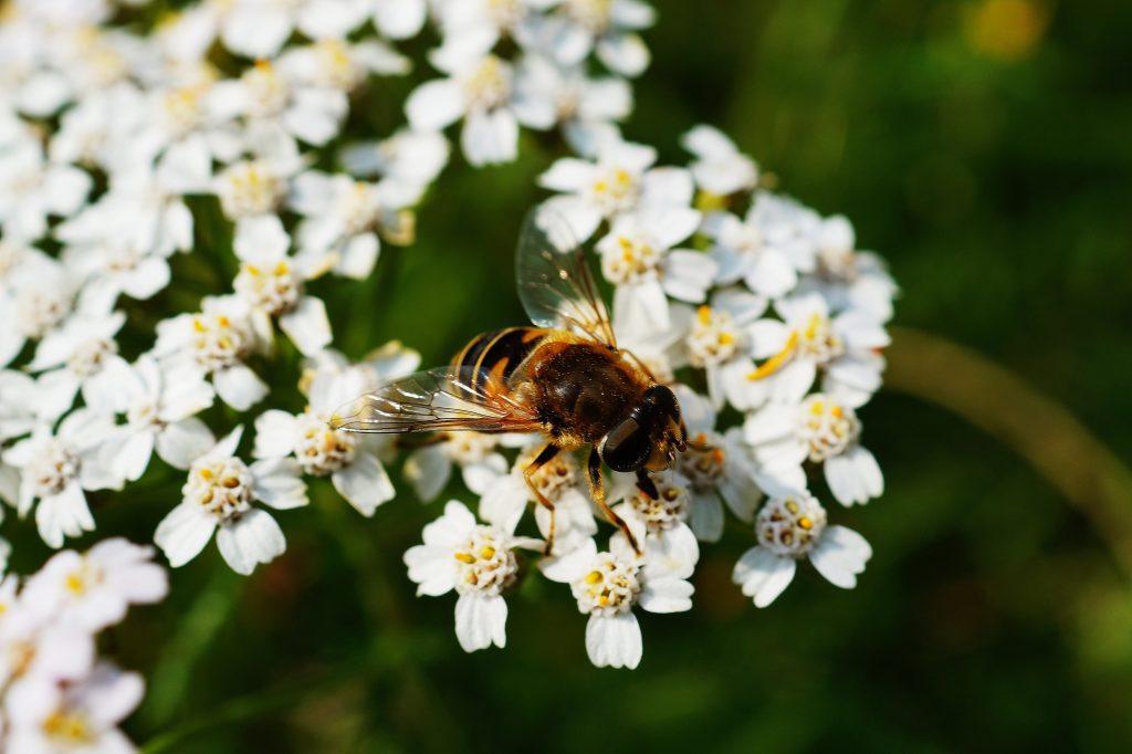 kampanja #začebele: Svetovni dan čebel 3
