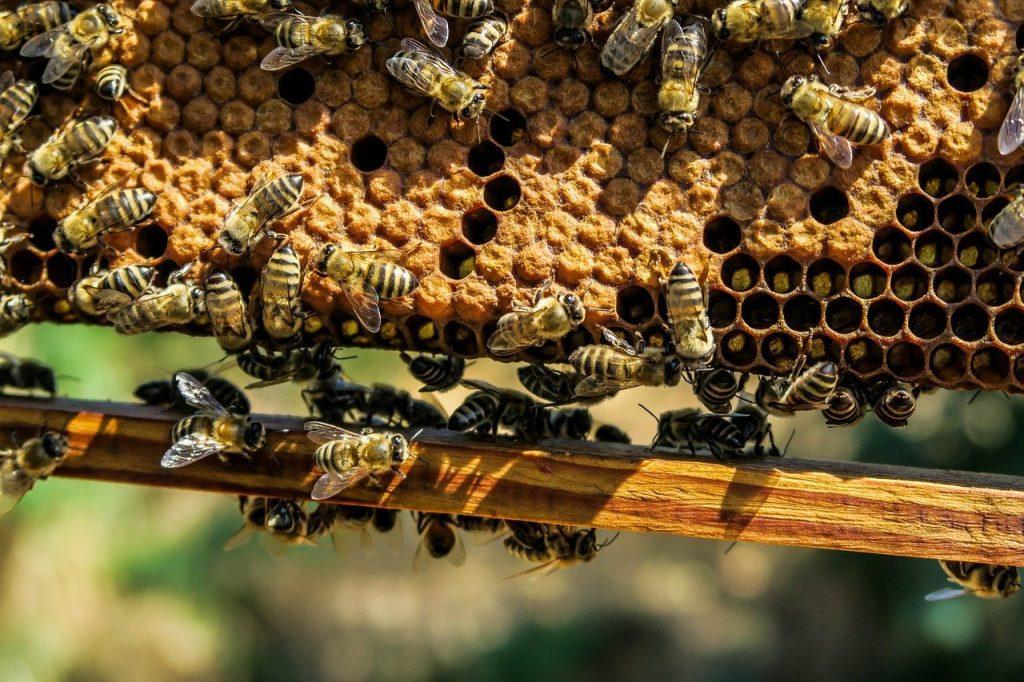 kampanja #zacebele: Čebele živijo v dobro organizirani čebelji družini