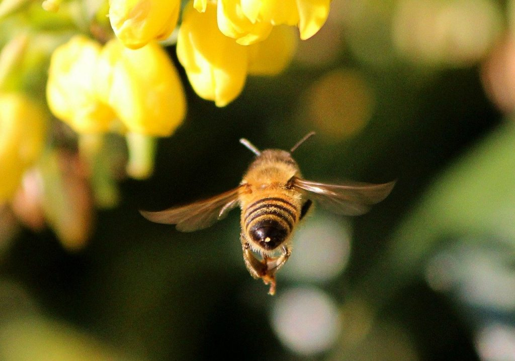 kampanja #zacebele: Čebele letijo s povprečno hitrostjo 20 km/h!