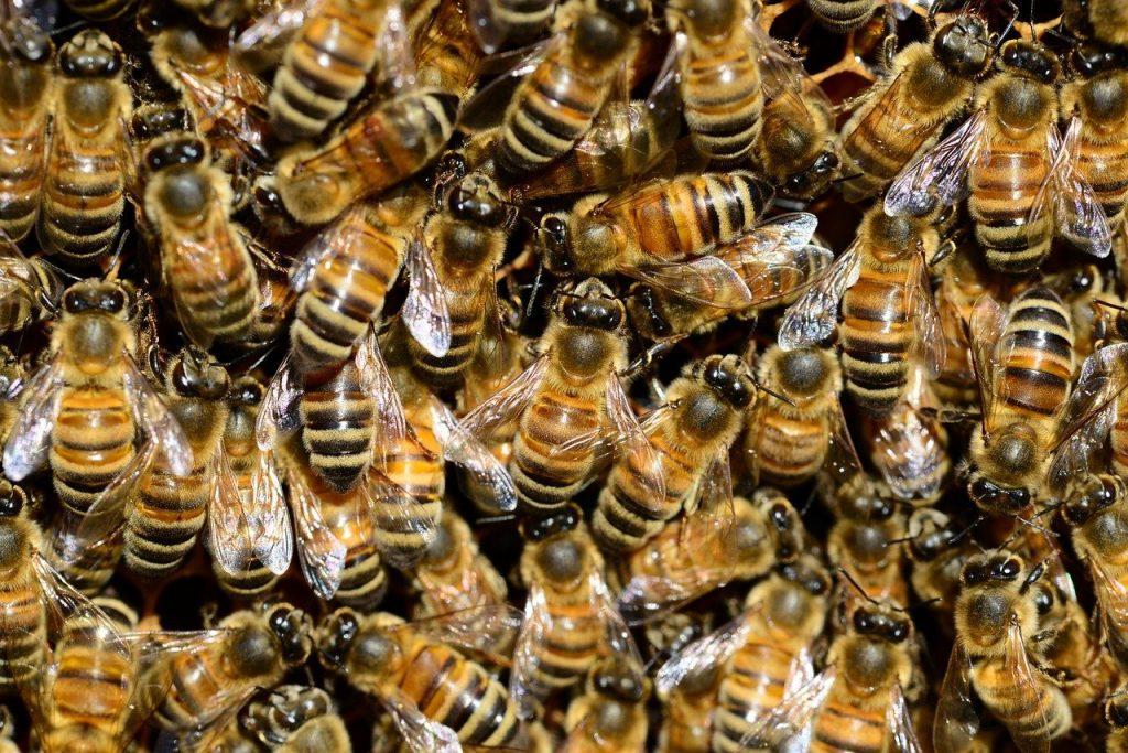 kampanja #zacebele: Vsaka čebela ima natančno določene odgovornosti
