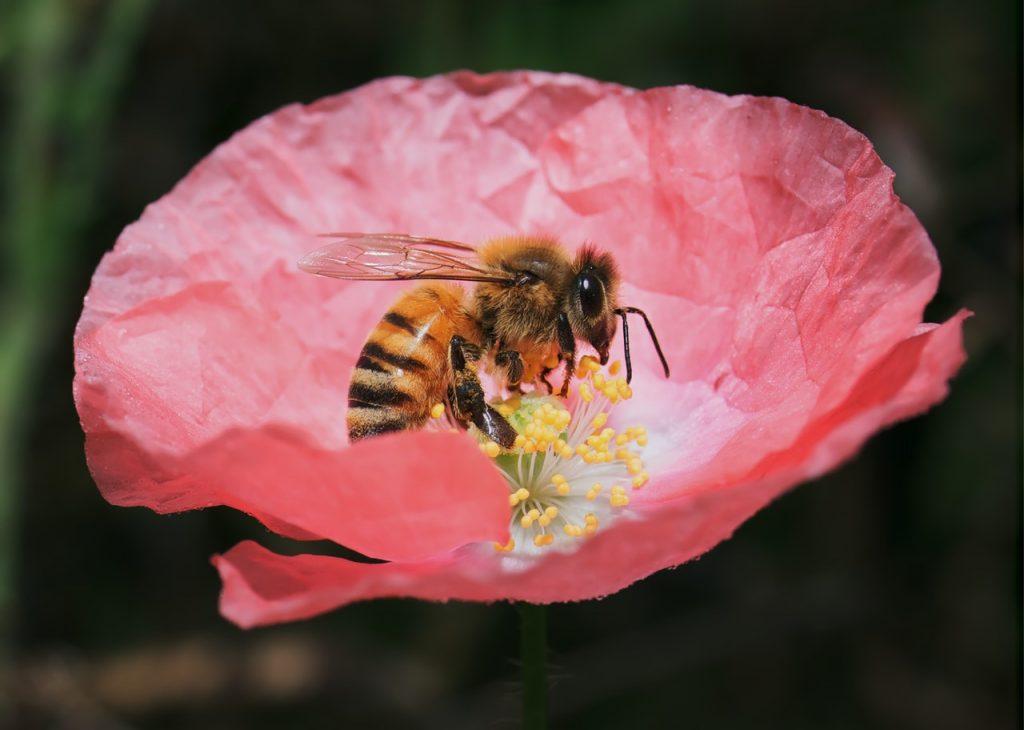 kampanja #zacebele: Med nastaja v čebeljih želodčkih