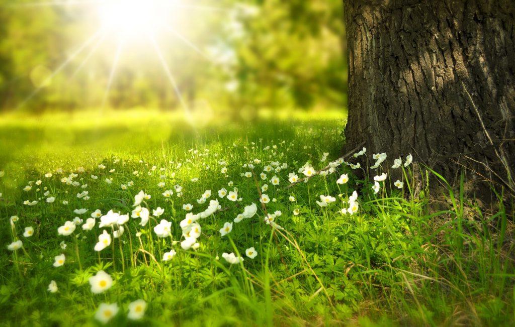 ZaCebele: Čudovito cvetenje lahko povzroča alergije